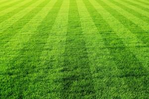 gruens fussballfeld